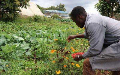 Emmanuel ist stolz auf seinen Garten